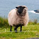 Emerald Expressions, photographs of Ireland.